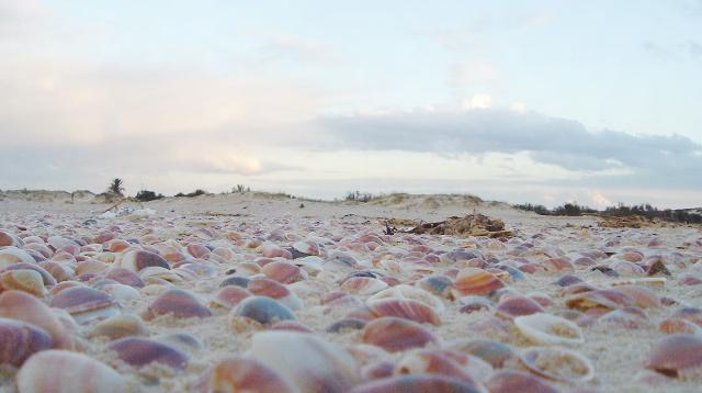 טיול עם ילדים בקיץ - חוף ניצנים